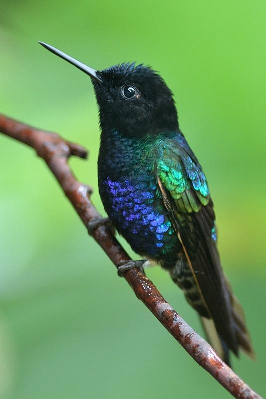Birdfinders  Birdwatching Holidays